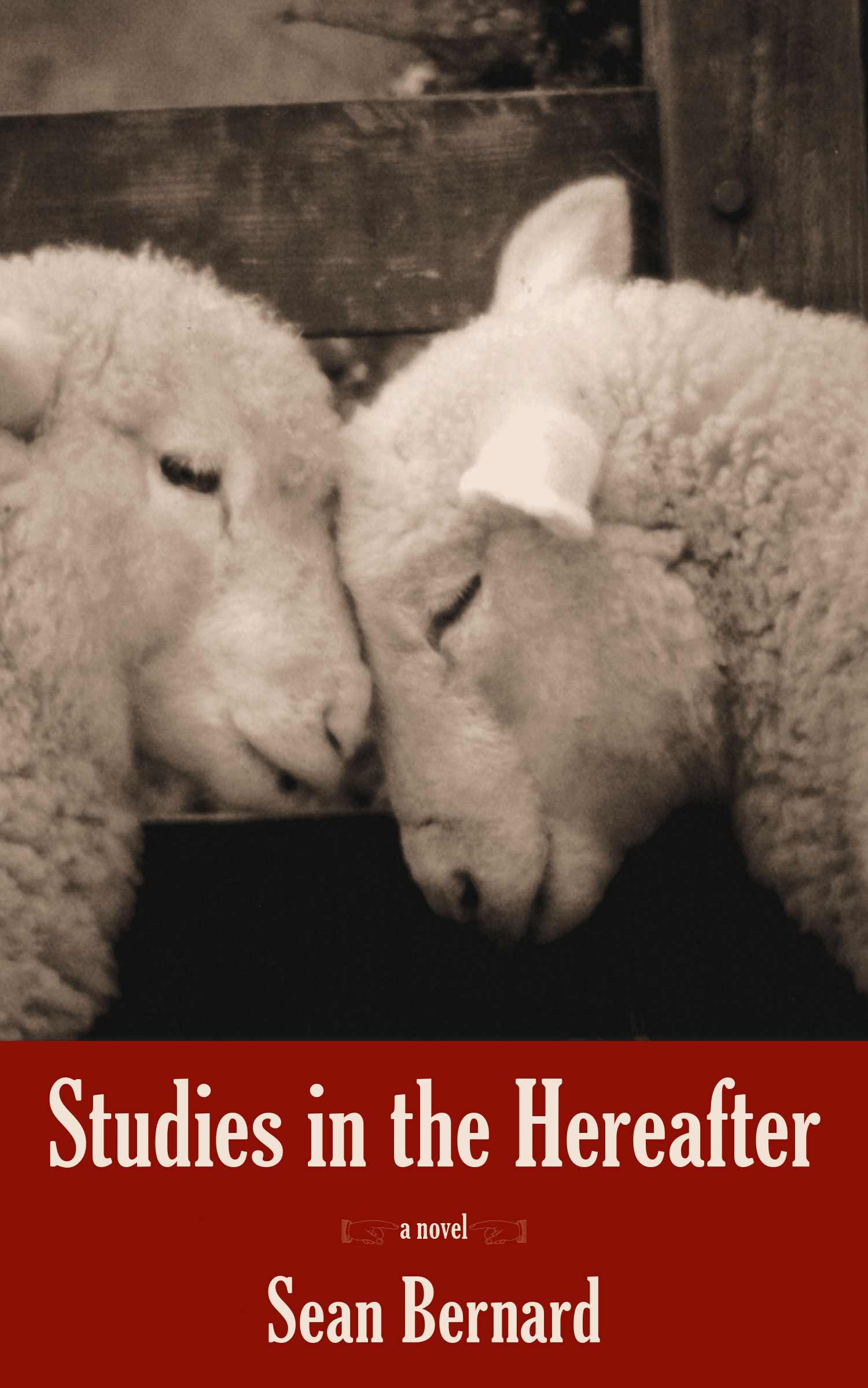 """An image of two sheep with their foreheads touching, a red background with white text """"Studies in the Hereafter a novel Sean Bernard"""